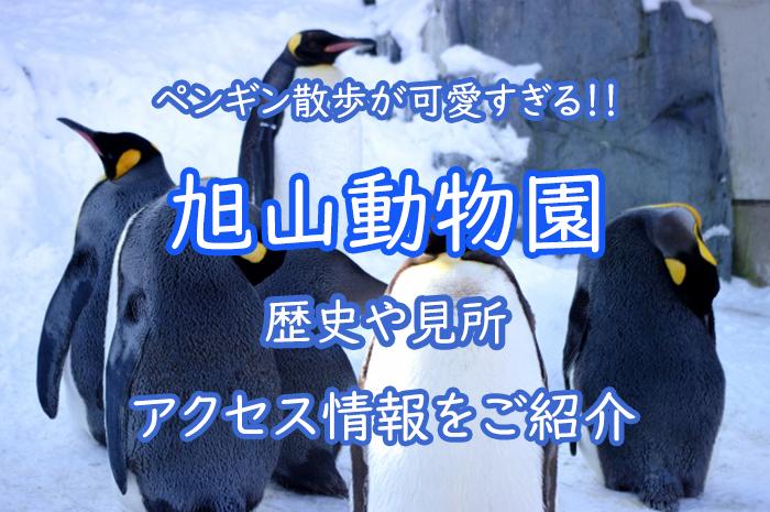 旭山動物園の歴史や見所(ペンギンの散歩も)、アクセス情報をご紹介