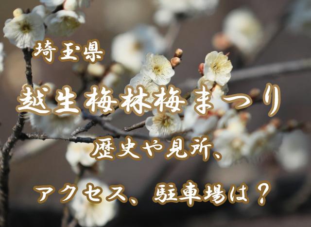 【埼玉】越生梅林梅まつりとは?歴史や見所、アクセス情報をご紹介!
