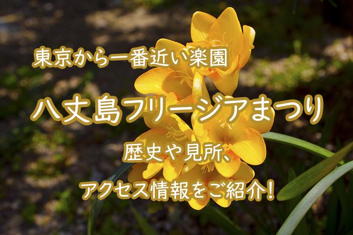 【東京】八丈島フリージアまつりとは?歴史や見所、アクセス情報をご紹介!