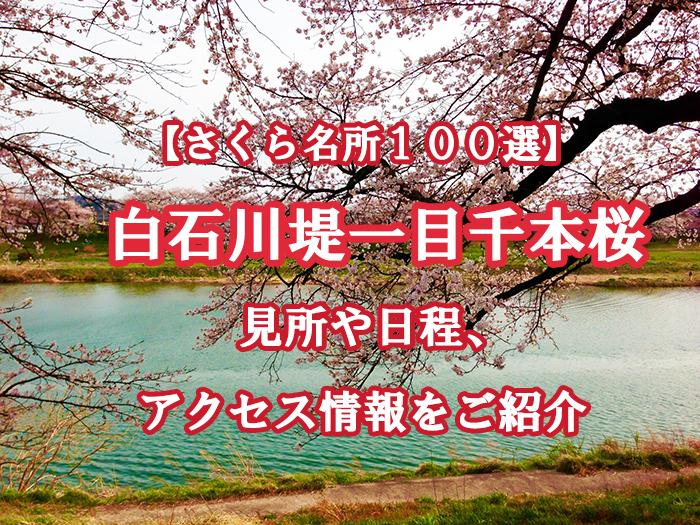 【宮城】白石川堤一目千本桜とは?見所や日程、アクセス情報をご紹介