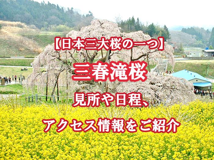 【福島県】三春滝桜とは?見所や日程、アクセス情報をご紹介!