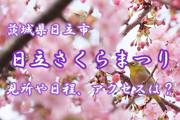 【茨城】日立さくらまつりとは?見所や日程、アクセス情報をご紹介!