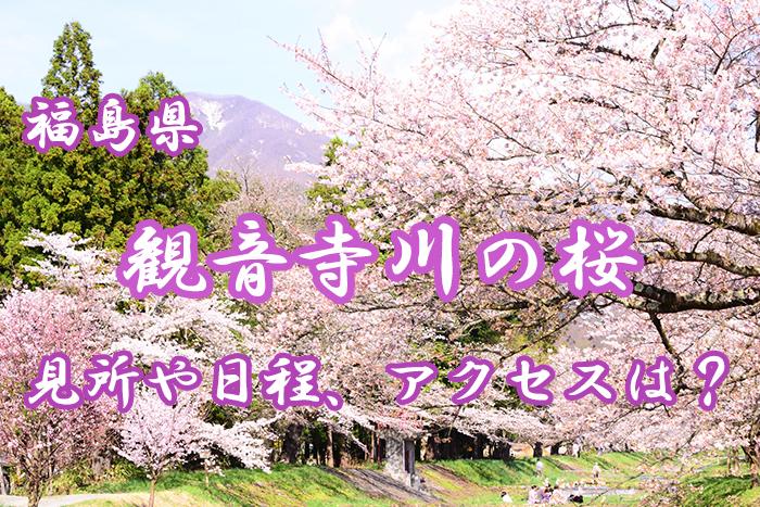 【福島県猪苗代】観音寺川の桜とは?見所や日程、アクセスを紹介!