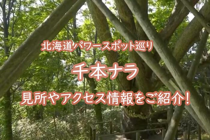 【北海道パワースポット】千本ナラとは?見所やアクセス情報をご紹介!