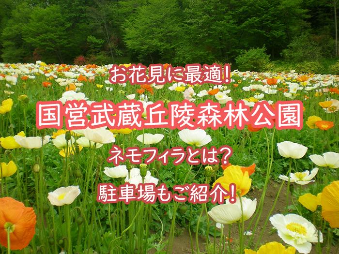 国営武蔵丘陵森林公園でお花見!ネモフィラって何?駐車場もご紹介!
