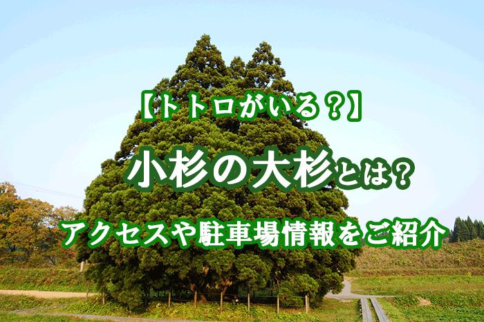 小杉の大杉とは?アクセスや駐車場情報、トトロとの関係もご紹介!